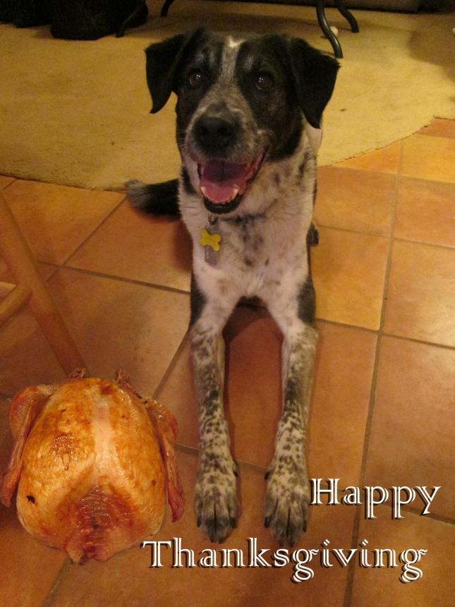 Bongo with a turkey next to him