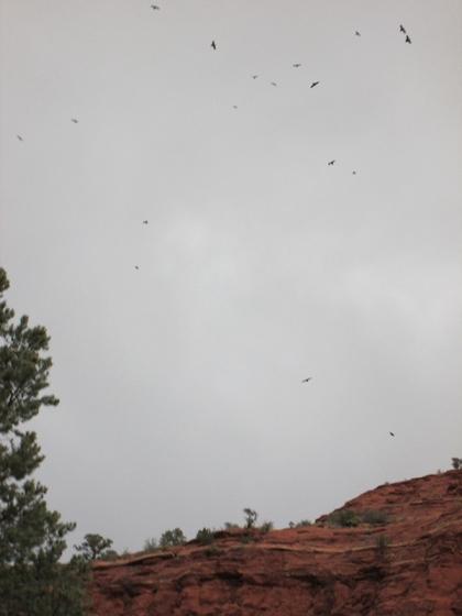 Ravens in the sky