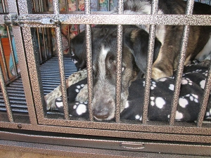 Bongo in dog jail looking sad