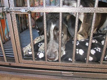 Bongo in dog jail looking sad