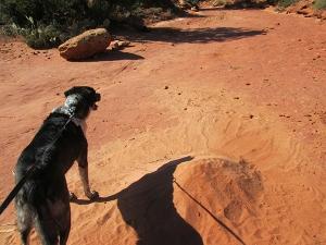 Bongo near a sand pile