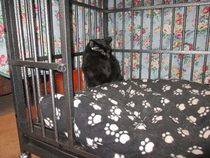 Scratchy alone in the kennel