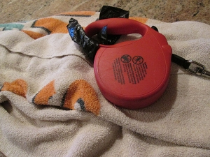 Red leash on a towel