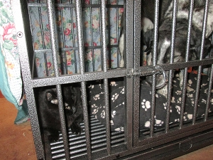 Bongo and Scratchy in the kennel together