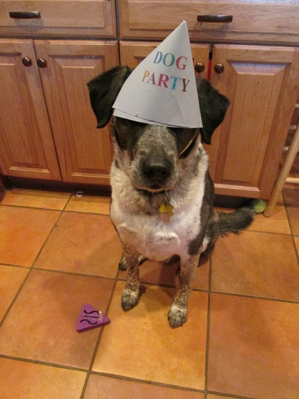Bongo with his party hat down over his eyes