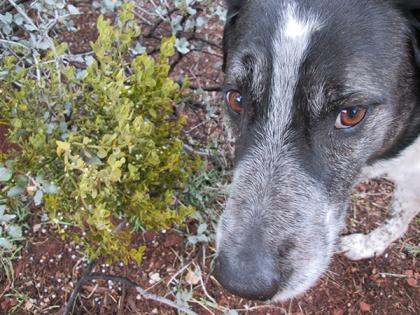 Bongo's face next to the mistletoe