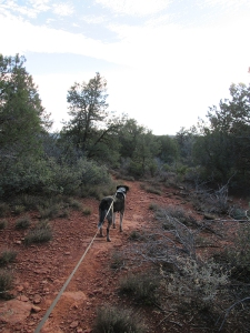 Bongo on the trail