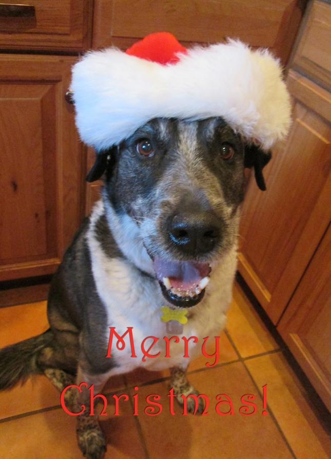 Bongo in a Santa hat