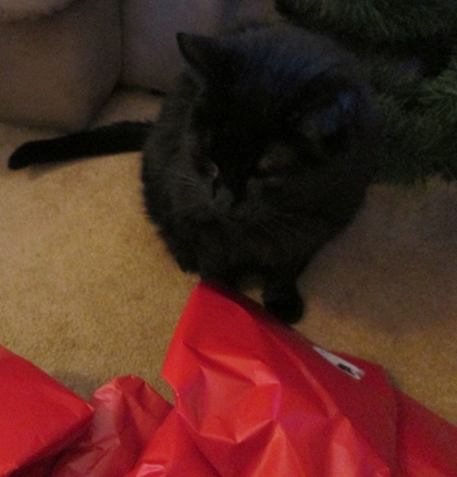 Scratchy on the floor with presents