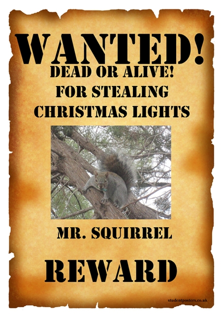 Wanted poster of the squirrel