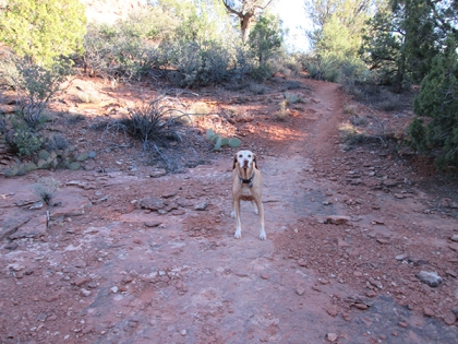 Brown Dog on the trail