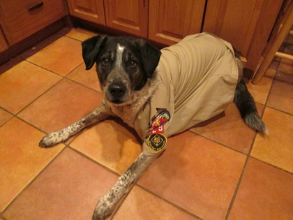 Bongo in a Boy Scout shirt