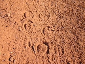 Horse shoe prints in the dust