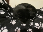 Scratchy sleeping on Bongo's bed