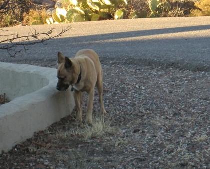 Brown dog near a road