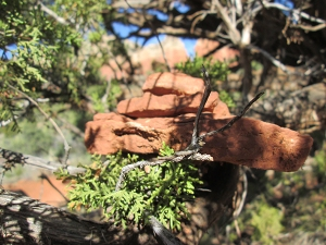 Red rocks in a tree