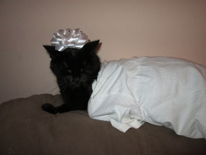 Scratchy in a t-shirt with a bow on his head