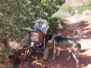 Bongo sniffing a stroller on the side of the trail