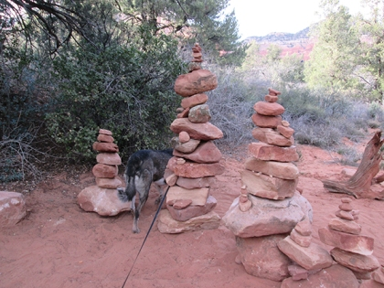 Bongo checking behind the rock piles