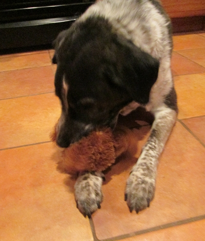 Bongo with his bear