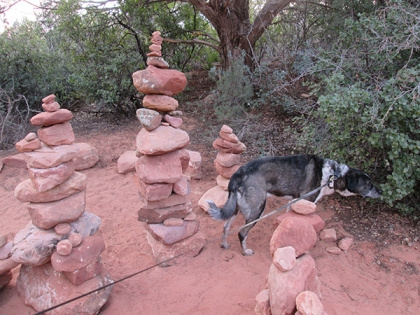 Bongo sniffing the bushes behind the rock piles
