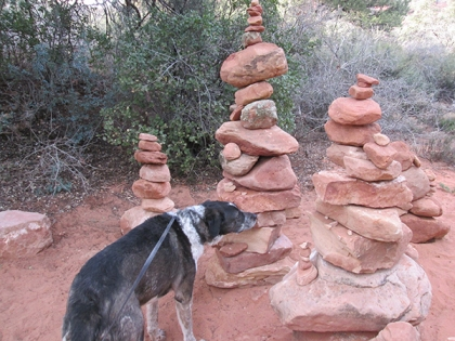 Bongo sniffing a rock pile