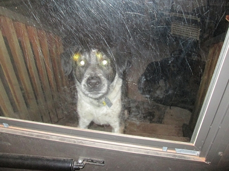 Bongo with glowing eyes outside a glass door