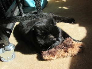 Scratchy sleeping on a toy bear