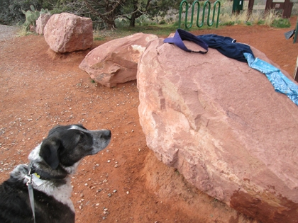 Bongo looking at clothes on a rock