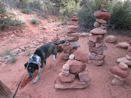 Bongo digging near the rock piles