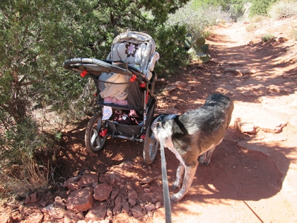 Bongo sniffing the stroller's wheel