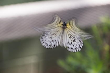 Butterfly with an angel shape due to motion