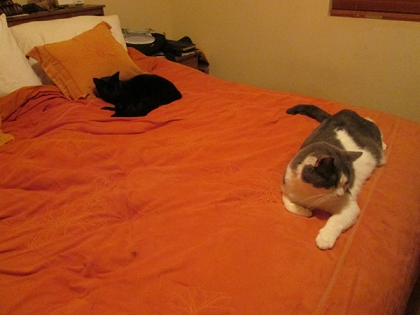 Tiberius and Gizmo on the bed