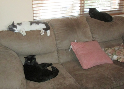 Tiberius, Gizmo, and Scratchy on the couch
