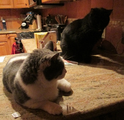 Gizmo and Scratchy on the kitchen counter