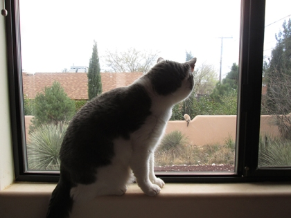 Gizmo looking out the window at a cat