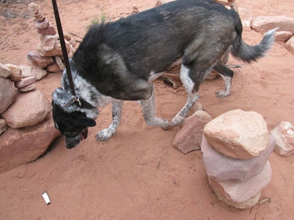 Bongo knocked over a few rocks