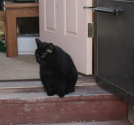 Scratchy sitting at an open door