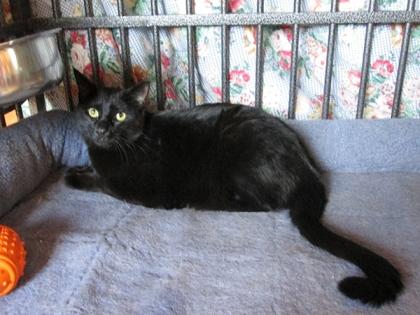 Tiberius in Bongo's kennel