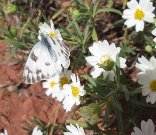 White butterfly on white flowers
