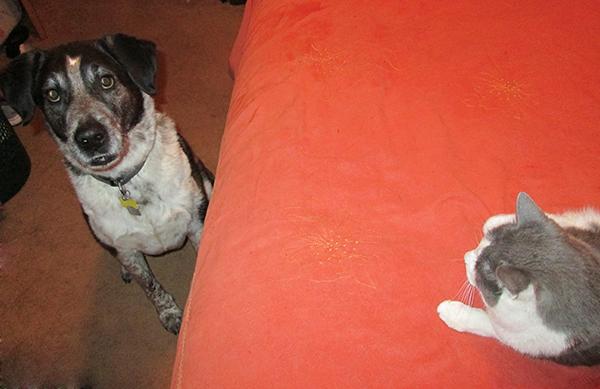 Bongo on the floor - Gizmo on the bed