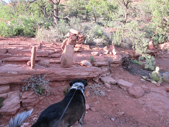 Bongo checking out the rock piles