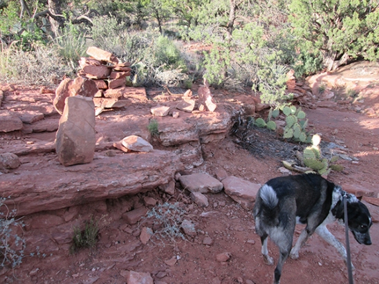 Bongo slinking away from the rock piles