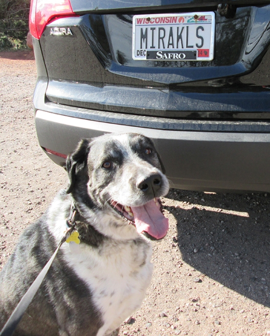 Bongo in front of a license plate that says MIRAKLS