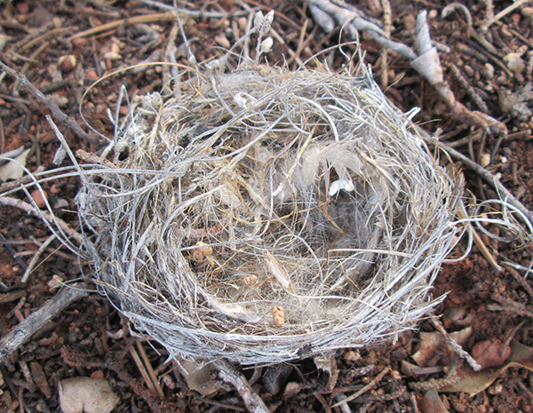 Small bird's nest on the ground