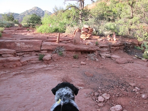 Bongo looking at new rock piles on the trail