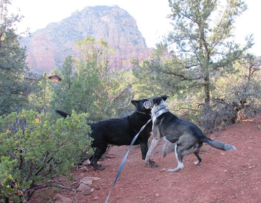 Bongo jumping near Layla
