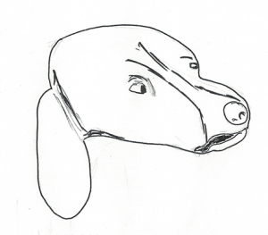 Drawing of a mad dog's head