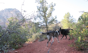 Bongo and Layla meeting on the trail