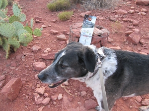 Bongo next to a church invite on the trail
